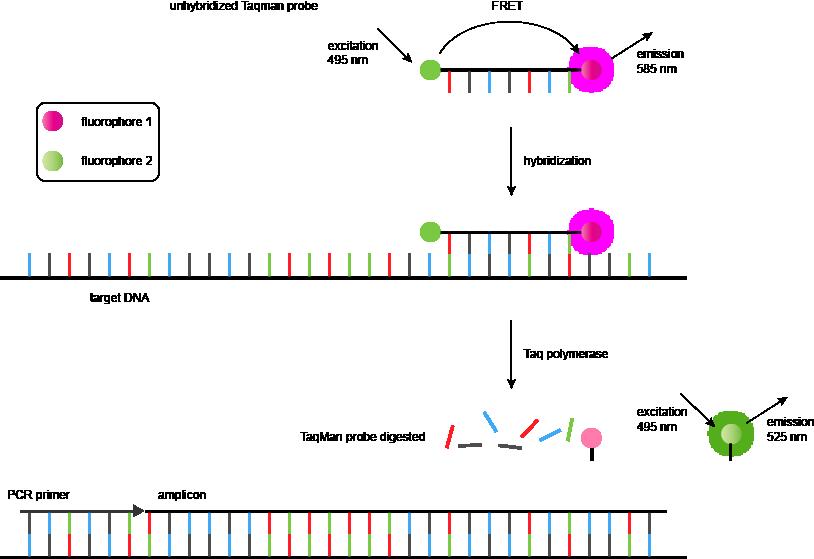 测序,法医分析和遗传分析