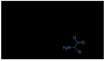 蛋白质合成