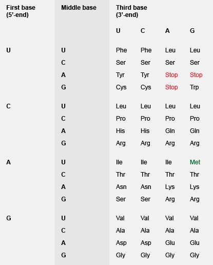 遗传代码 - 三重为20个氨基酸的密码子分配。 以及编码蛋氨酸,AUG被用作起始密码子,起始蛋白质的生物合成