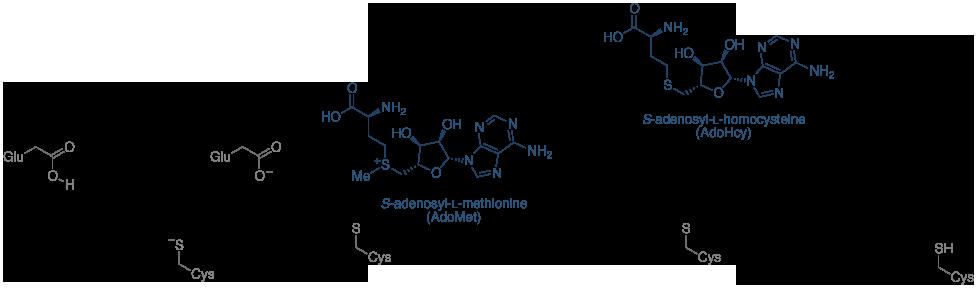 胞嘧啶甲基机制