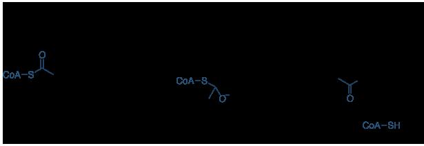 赖氨酸乙酰化机制