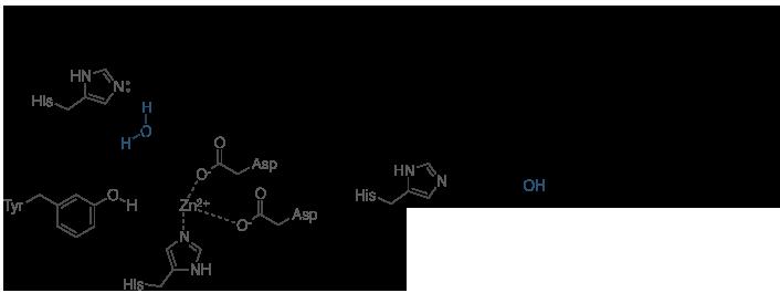 赖氨酸乙酰机制