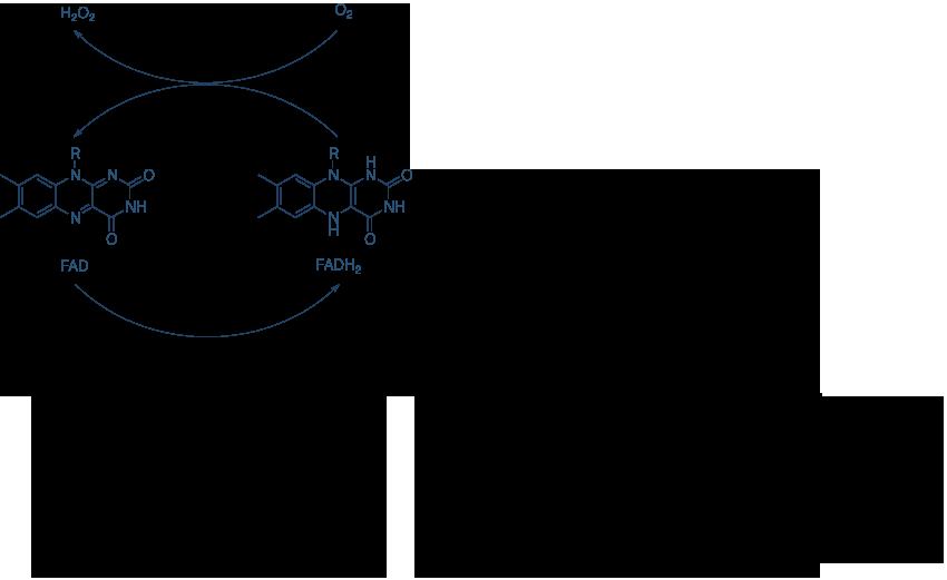 赖氨酸去甲基化机制