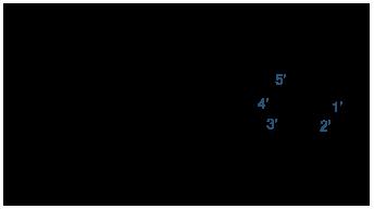 一脱氧和脱氧核苷酸的结构