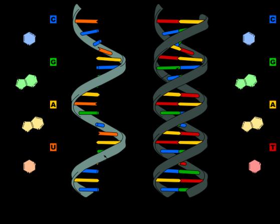 预防性基因检测